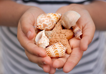 Little girl holding seashells and starfish in hands