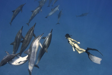 Hawaii, Free-diver observing dolphins