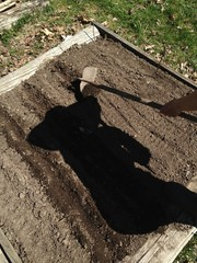 Silhouette of person gardening