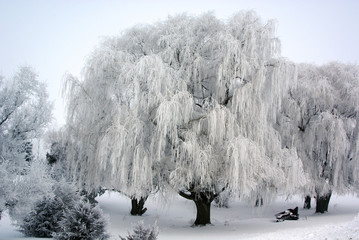 USA, Minnesota, Frosted willows