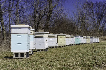 St. Charles, Kane County, Illinois, United States of America, Apiary In Spring