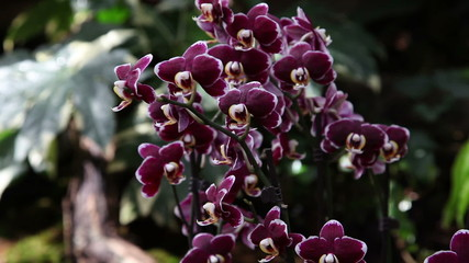 Beautiful orchid's blossom