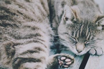 UK, Grey tabby cat sleeping on bench