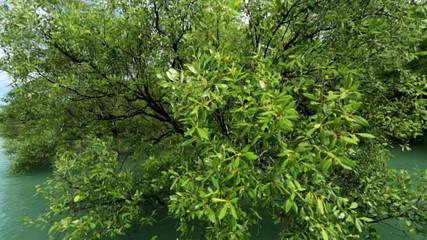 Mangrove forest protect coastal areas, Thailand