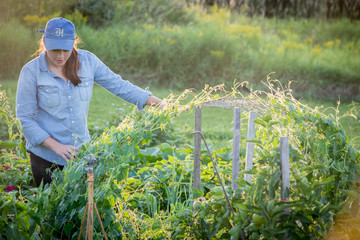 USA, Maine, Woman in organic garden