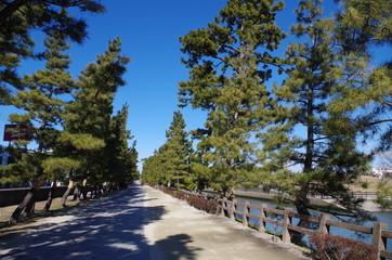 草加松原と川沿いの道
