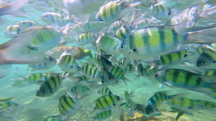 Tropical fish in clear blue waters, Southern Hemisphere