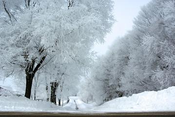 USA, Minnesota, Long snowy road