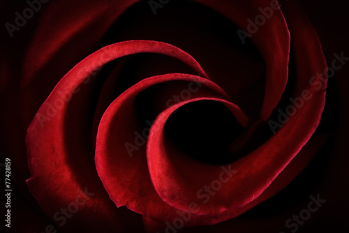 Red Rose Petals Macro - Abstract - 77428159