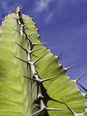 USA, Florida, Miami-Dade County, Miami, Thorny green succulent plant