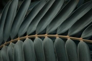 Detail of leaf