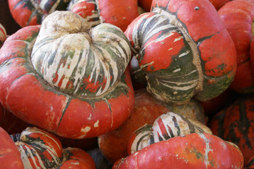 USA, Minnesota, Close-up of red gourds