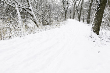 USA, DuPage County, Illinois, Path in forest at winter