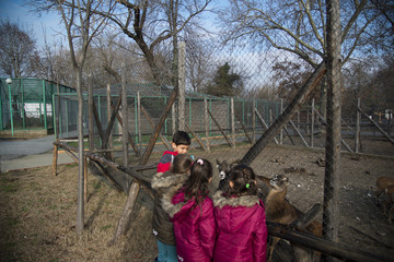 4 kids visiting zoo feeding the animals