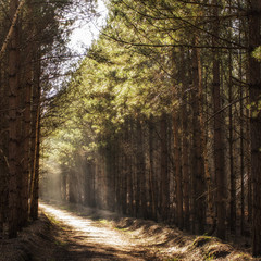 Morning light on woodland path