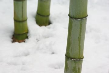 雪の中の竹
