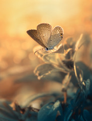 Indonesia, West Java, Bekasi, Close up of butterfly