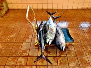 Dead fish on trolley