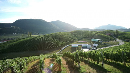 Sceneric wineyard with amazing landscape in backgrounds