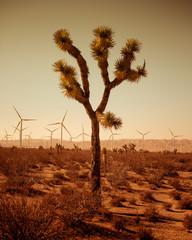 Single tree of desert, wind turbines in background