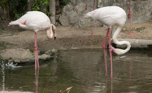 Foto op Aluminium Flamingo Graceful Pink flamingo, beautiful bird