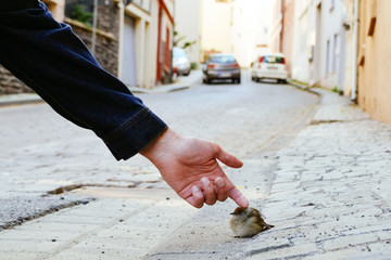 Man touching sparrow on street