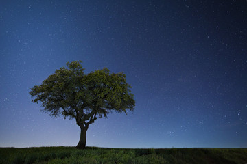 Green oak against starry sky