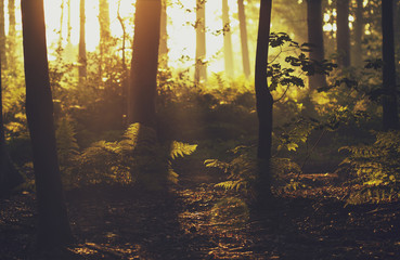 Belgium, West Flanders, Brugge, Forest in sunlight