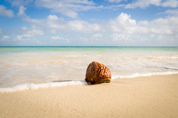 Antigua and Barbuda, Antigua, Coconut on Hodges Bay Beach