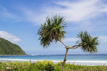 Indonesia, Lombok, Palm tree growing on grassy beach