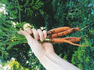 USA, Ohio, Hamilton County, Cincinnati, Hand holding fresh carrots