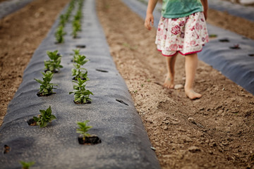 Girl walking barefoot through row of seedlings