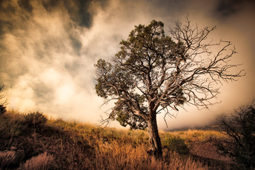 USA, Colorado, Old tree against stormy sky at sunset