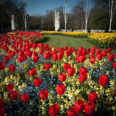 England, London, Tulips in front of Buckingham Palace