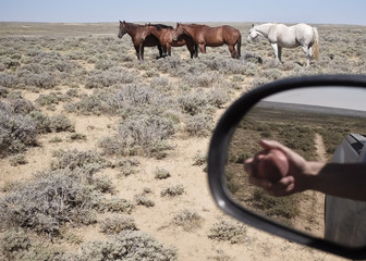USA, Wyoming, Horses and reflection of hand with apple in side mirror