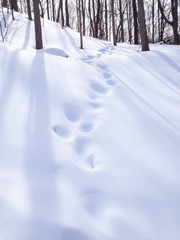 USA, Illinois, DuPage County, Darien, Winter woods in afternoon