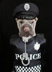 Portrait of shar pei dog in police uniform