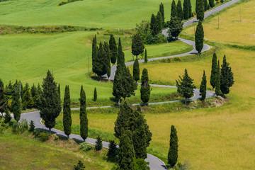 Italy, Tuscany, Monticchiello, Small trees along winding road