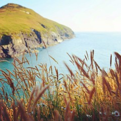 Reeds by coast
