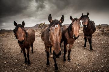 Portrait of herd of horses