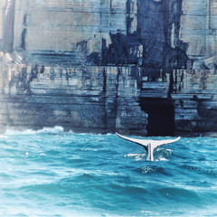 Australia, Tale of fish jumping into water