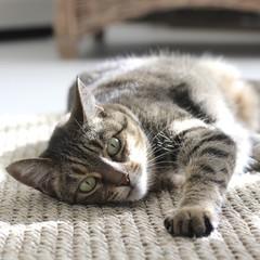 Cat lying on carpet