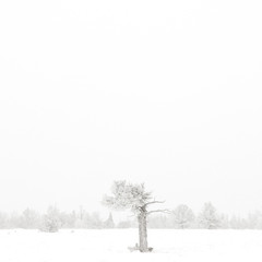 USA, Wyoming, Albany County, Laramie, Tree in snow covered landscape