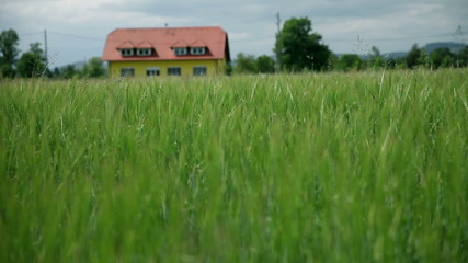 Beautiful landscape with green grass and house in background