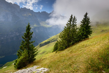 Switzerland, Appenzell Alps, Spruce trees growing on grassy mountainside