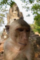 портрет макаки на развалинах храма