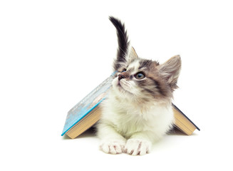 fluffy kitten lying under an open book isolated on white backgro