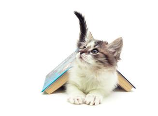 fluffy kitten lying under an open book isolated on white backgro