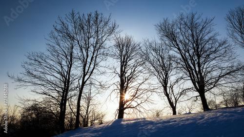 canvas print picture Winter Sun