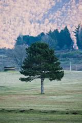 Albero e sfondo boschivo